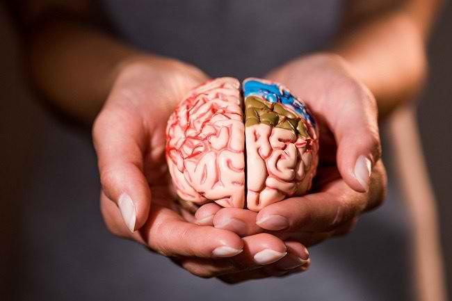 Mengenal Bagian Otak dan Fungsinya Bagi Tubuh